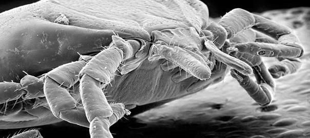 tick-lyme-disease.jpg