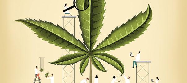 Andrew Lenhardt, MD | Marijuana/ Hope or Hype?